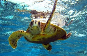 Everything you need to know about Sea Turtle Season