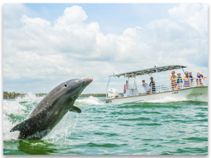MARCO ISLAND BEACH GETAWAY DOLPHIN TOURS